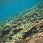 水納島に鬼退治&ゴリラチョップで南国のクリオネと・・・