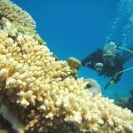 瀬底島がナイス透明度すぎます!    ダイブナッツブログ