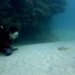 美らな海の水族館   ダイブナッツブログ