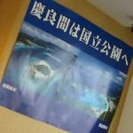 阿嘉島ツアーから帰ってまいりました!     ダイブナッツブログ
