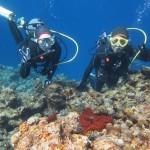 本日瀬底島でまったりダイビング☆  ダイブナッツブログ