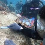 チームユニバーシティーズと珊瑚植え付け IN 渡嘉敷島☆   ダイブナッツブログ