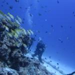 爆流水納島とまったり瀬底島☆そして夜は・・・   ダイブナッツブログ