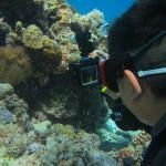 水納島でカメフィーバーな1日☆  ダイブナッツブログ