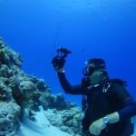 本日マンツーマンで水納島ワイドダイビング   ダイブナッツブログ