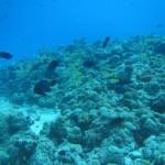 海の中も暖かくなってまいりました!   ダイブナッツブログ