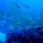 ホームグラウンド水納島&瀬底島は癒しの水中世界です!   ダイブナッツブログ