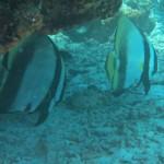 嵐の前の静けさか?エモンズ&水納島   ダイブナッツブログ
