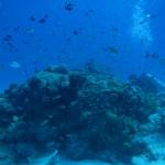 透明度良好な水納島☆   ダイブナッツブログ