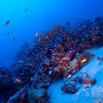 最高の水納島と最高のゴリラチョップダイビング☆  ダイブナッツブログ