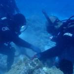 水納島のブイのメンテナンス、そしてレイシガイ駆除へ   ダイブナッツブログ
