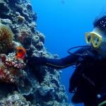 瀬底島でまったり地形ダイビング☆   ダイブナッツブログ