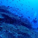伊江島タッチュー、水納と瀬底と時々ゴリラチョップ     ダイブナッツブログ