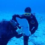大うねりに乗っかって水納島へ   ダイブナッツブログ