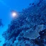 水納島は秋でも魚がわんさかやで〜!   ダイブナッツブログ