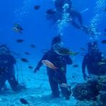 体験ダイブ&FUNダイブで水納島を楽しんできまくりました!  ダイブナッツブログ