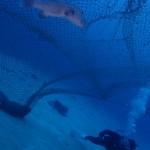 亀好きダイバーさんとカメ三昧な3ダイブ     ダイブナッツブログ