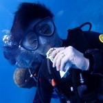日中のサンゴ産卵やちっこい系の生物やごっつい系のマッチョ兄さん   ダイブナッツブログ