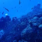 今日は水納島・瀬底島をワイドで楽しむ☆   ダイブナッツブログ