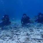 安定の海況の水納島☆  ダイブナッツブログ