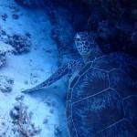 水納島でカメちゃん見ながらまったりFUN、シュノーケル&講習してきました☆   ダイブナッツブログ
