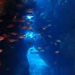 瀬底島で地系と可愛い生物に癒やされる☆   ダイブナッツブログ