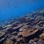 水納島のサンゴがキレイすぎる☆  ダイブナッツブログ