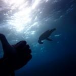 フォト講習IN水納島   ダイブナッツブログ