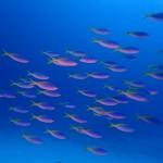 水納島と瀬底島を巡る午後☆  ダイブナッツブログ