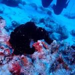 可愛い生物が沢山な水納島と瀬底島☆   ダイブナッツブログ