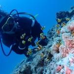 6月に入り、水納島が徐々に本気出してきている件  ダイブナッツブログ
